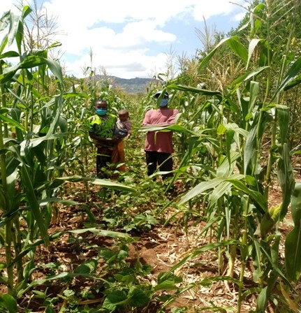Conservation agriculture amidst the pandemic